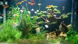 cách nuôi cá cảnh trong bể kính
